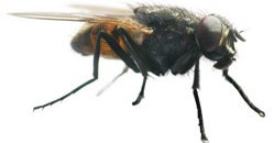 insektenschutz nach ma. Black Bedroom Furniture Sets. Home Design Ideas
